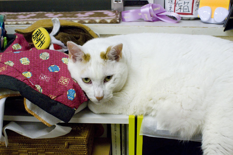 Tokyo Cat Cafe Asakusa