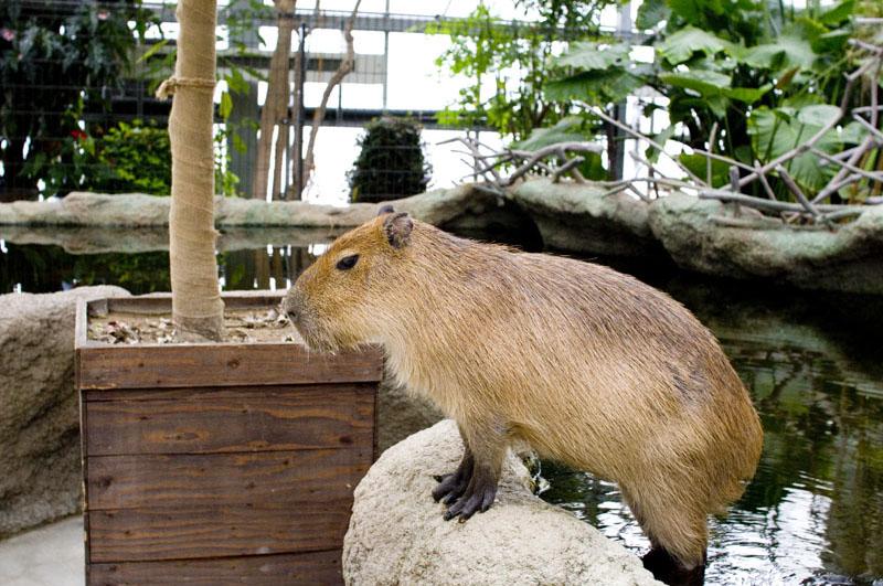 Kobe Animal Kingdom: Kobe Port Island