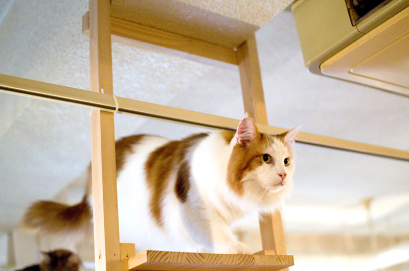 Cat Cafe Kyoto Kawaramachi
